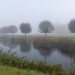 rsz_autumn_mist_and_centenary_willows