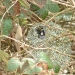 long-tailed-tit-at-nest