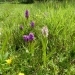 rsz_colours_of_early_marsh_orchids