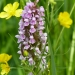 rsz_early_marsh_orchid
