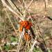 rsz_hibernating_7_spot_ladybirds